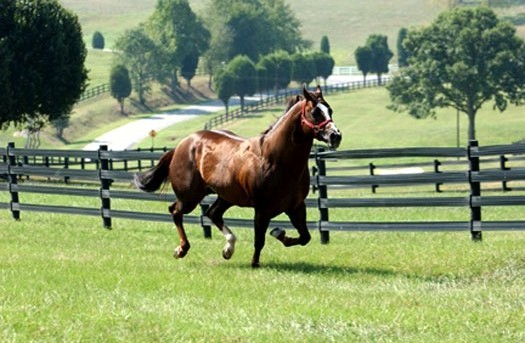 sizzling hot quarter horse
